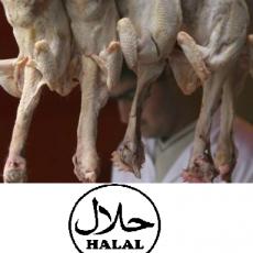 halalfooding